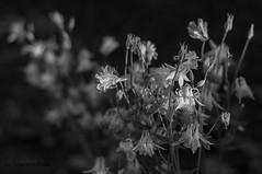 Untitled (Grzesiek.) Tags: plant flower flora bokeh kwiat dephoffield kwait