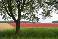 Kleefeld (izoll) Tags: klee kleefeld feld acker landschaft naturaufnahmen izoll sony alpha77ii tschechien