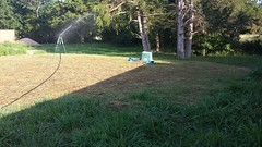 Just Watering the Grass (NerdAcres) Tags: water grass site lawn seed utility watering 2016 sprinkling terraforming