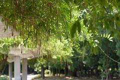 CRW_8395 (kisugi802) Tags: eosd60 2016 長居植物園 20160618