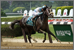 Tom's Ready wins the Woody Stephens (Spruceton Spook) Tags: horses horseracing belmontpark woodystephens tomsready