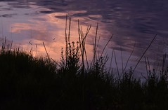 Sunset (careth@2012) Tags: sunset reflection nature grass silhouette reflections nikon scenery view scenic scene ripples 55300mm nikond3300 d3300