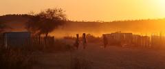 DSC_8890 (stephanelhote) Tags: animaux parc etosha afrique namibie éléphants zambie himbas guépards