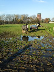 A wet meadow (Wouter de Bruijn) Tags: autumn trees horse fall wet water grass animal puddle watertower zeeland blanket land iphone walcheren iphone5c