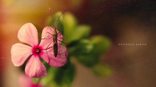 A candid love of insect and flower