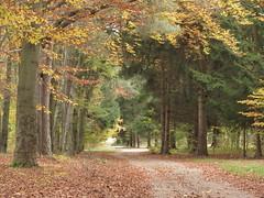 Herbst (germancute) Tags: autumn fall nature landscape herbst landschaft
