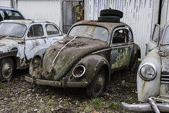 VW Export 1949 (649) (belowodje) Tags: graveyard vw volkswagen lost beetle rusty places junkyard kfer kaufdorf