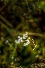 Rosegarden Winter Wind