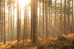 TomVdB_141122_6762 (Van den Bergh Tom) Tags: belgium belgique belgie herfst tomvandenbergh