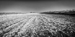 White Mark (Stuart Feurtado) Tags: blackandwhite monochrome landscape frozen chalk frost nik nationaltrust oxfordshire oxon 1635 d600 watlingtonhill watlington thestripe silverefex