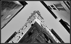 la torre (kurtwolf303) Tags: italien bw italy tower topf25 canon eos topf50 topf75 italia torre 500v20f lucca tuscany sw toscana turm 600d 900views 750views 1000v40f 250v10f monochromefineart unlimitedphotos canoneos600d canont3i minimum500v minimum1000v minimum700v