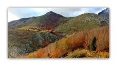 Colors time ... (Orpinbleu) Tags: autumn trees red mountain france montagne automne flickr corse couleurs arbres hautecorse emilienneparrotbousquet