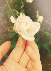 All our memories are bathed in tears (surfingstarfish) Tags: nature rose garden hand blossom finger natur romance romantic blüte longing romantik dornen sehnsucht