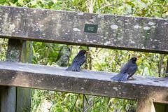 IMG_5810.jpg (Brendon & Keryn) Tags: newzealand spring wellington northisland zealandia
