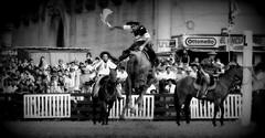 Poncho y espuelas (Eduardo Amorim) Tags: horses horse southamerica criollo caballo uruguay cheval caballos cavalos prado montevideo pferde cavalli cavallo gauchos pferd chevaux gaucho  amricadosul montevidu uruguai gacho amriquedusud  gachos  suramrica amricadelsur sdamerika crioulo caballoscriollos criollos jineteada  americadelsud gineteada crioulos cavalocrioulo americameridionale caballocriollo campeiros campeiro eduardoamorim cavaloscrioulos pasomolinosudamrica