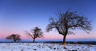 winter sunset - purple and blue
