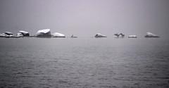 Cormorants in foggy fjord (ib.aarmo) Tags: winter sea snow cold cormorants stones fjord cormorant