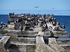Puerto Montt / Punta Arenas-10