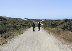 Pacifica 1 (Vi) Tags: california usa eua davenport santacruzcounty pacifica1 pigeonpointsantacruz 22062014 junho2014 camarillohwy
