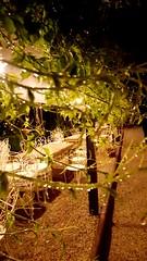 Arbor (simonapone) Tags: arbor pergola