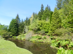 Water Gardens, Attadale Gardens, Wester Ross, May 2016 (allanmaciver) Tags: trees green water gardens scotland ross highlands pond warm sunny visit shades delight enjoy wester admire attadale allanmaciver