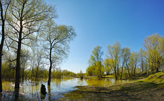 Spring. High water at the branch of Ob river.  (DP0Q3208-3211-4imagesCFSmCM2048x1262WMJPM) (Vadim_PP2013 (>330000 views)) Tags: trees sky panorama water river landscape spring shore sigmadp0quattro