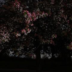 TERRA INCOGNITA (Grant Simon Rogers) Tags: colour london blossom flashing brixton lambeth flasher bloomers brockwellpark hernehill animamundi  terraincognita individuation billyblake grantsimonrogers themanwhoflashedattrees themaytree flashefx20 fujifilmx100t thefirst10000 landingplaceforlambs fujiflasher antiwarphotography antiwarphotographer