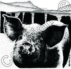 pig and Cadair Idris (myfanwy.brewster) Tags: pets texture animals fur eyes ears wallart whiskers snowdonia boar inkdrawing sow farmanimals stylized snout handdrawn pointillism cadairidris petportraits commissions welshart risingvalleymist animalinkdrawingscom