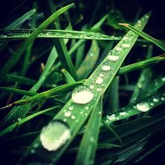 water (christyehh) Tags: verde green beautiful hojas bonito gotas omg