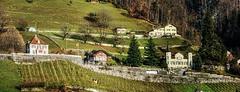 Walenstadt Backdrop (Elliott Bignell) Tags: stone schweiz switzerland vineyard suisse ostschweiz dry walls svizzera rheintal weinberg walenstadt rheinvalley