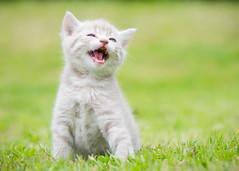 'Cookie' (Jonathan Casey) Tags: nikon kitten f28 105mm d810