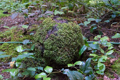 Mossy (hermilo87) Tags: green grass leaves rock stone forest moss flora mossy