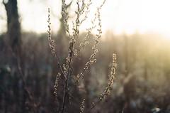 Bits. (Paul_Munford) Tags: light sunset london film minolta kodak minoltax700 grain analogue fulham portra goldenhour kodakportra160 mcrokkor3570mm