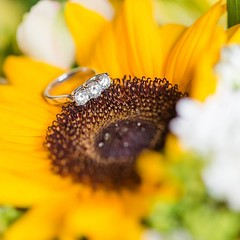 Was so excited to photograph this stunning 3 stone ring again! It was Matt's grandmother's! #naweddings #linkinprofile (Nicole Amanda Photography) Tags: instagram wedding photographer ottawa weddingphotographer photography blog engaged square was excited photograph this stunning 3 stone ring again it matts grandmothers naweddings linkinprofile