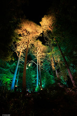 Enchanted Forest, Pitlochry, Scotland (mmcclair) Tags: faskally forest pitlochry 2016 wood lights enchanted enchantedforest enchantedforest2016 scotland show