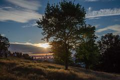 Sunset in Greenwich Park (Spannarama) Tags: greenwichpark london uk trees sunshine flare lowsun park blackheath blueskies clouds hill