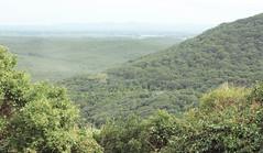 Luscious (Bethany O'Donnell) Tags: green nsw newsouthwales australia australasia oceania travel landscape southwestrocks rainforest