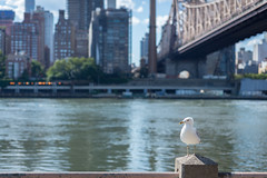 Roosvelt Island (-*Marie*-) Tags: nyc new york city usa