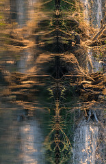 20160825_ZambeziReflectionsPortraits_MCM (mcmessner) Tags: abstract africa bjadventures morning morningboatride reflection rorschak southafrica2016 sunrise tongabezilodge water zambeziriver zambia livinstone