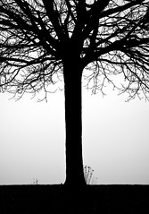 Winter Tree, Crescent Beach (ScarletBlack) Tags: silhouette tree crescentbeach backlight contrast blackoutline blackandwhite