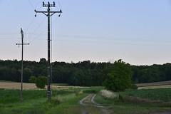 Le crépuscule sous un ciel dégagé (Flikkersteph -5,000,000 views ,thank you!) Tags: countryside eveninglight rural summer fields woodland trees foliage plantation clearsky twilight skyblue champagneetfontaine périgord france
