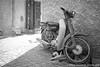 A Dog's Life (Juno Bengochea) Tags: dog sleep scooter morocco marrakech marrakesh marrocos