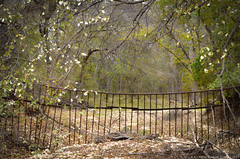 Behind the Gate - Detras del Porton (RRP Photography) Tags: autumn fall texas gates gainesville otoño forests bosques northtexas redrivervalley portones borderfx