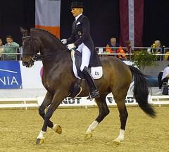 Brigitte Wittig, FEI Grand Prix Special, Meggle Preis (horseandbikeride) Tags: grandprix oldenburg 2014 meggle pferdetage