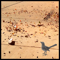 image (veryslowtimetraveler) Tags: cameraphone autumn fall colors leaves collage contrast trash speed corner turn circle energy day force calendar wind time loop air spin twist aves daily blow fallen combine surround 314 layers swirl annual 365 stir date everyday monday coil velocity caught collect trap levels merge app twine mockingbird compare blown pictureaday converge iphone graft whirl whirlwind encircle mimus polyglottos iphonography juxtaposer iphoneography 02014 fxphotostudio veryslowtimetraveler