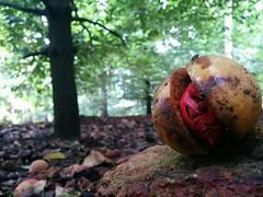 nature 5 nexus (Photo: Tuzup on Flickr)