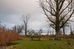 A tree and a bench (Landleven (Irma Lit)) Tags: bench bank boom bankje lonelyseat geocity exif:focallength=18mm camera:make=nikoncorporation camera:model=nikond300 exif:make=nikoncorporation exif:lens=1801050mmf3556 geostate geocountrys exif:model=nikond300 exif:aperture=ƒ11 exif:isospeed=400 oostvaardersplassenlelystadalmerewerkgroeplandschapfotoschoolstatiefdecember2014bomendesolaatlandschap