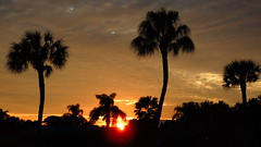 December 11, 2014 Sunset (Jim Mullhaupt) Tags: pink blue sunset red wallpaper sky orange color tree weather silhouette yellow clouds palms landscape evening nikon purple sundown florida dusk coolpix bradenton p510 mullhaupt cloudsstormssunsetssunrises jimmullhaupt