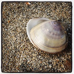 Clam #clam #beach #nature #sand #perlemor... (Anders SB) Tags: beach nature hongkong sand clam lantau perlemor skjell lokeiwan uploaded:by=flickstagram instagram:photo=844922003412316796202339955
