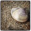 Clam #clam #beach #nature #sand #perlemor... (Anders SB) Tags: beach nature hongkong sand clam lantau perlemor skjell lokeiwan uploaded:by=flickstagram instagram:photo=844922003412316796202339955